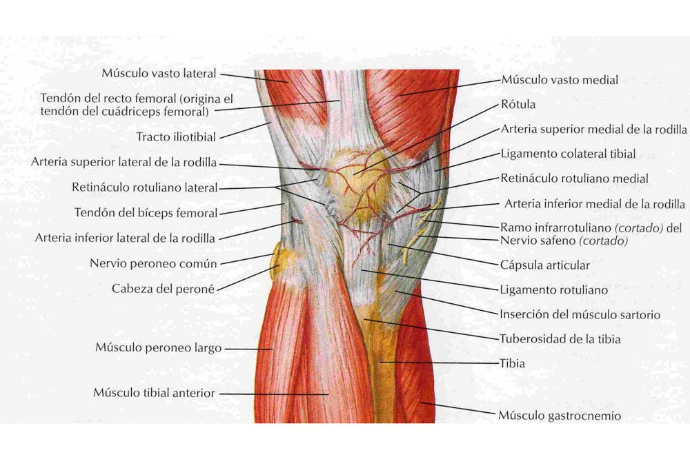Tendinitis del tendón rotuliano